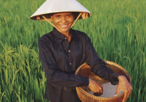 Cambodia6(ricefields)