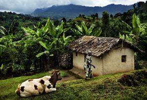 Uganda(village)
